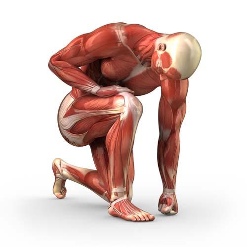 Astuces par groupe musculaire