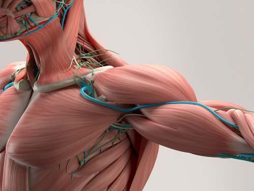 7 méthodes pour plus de congestion musculaire