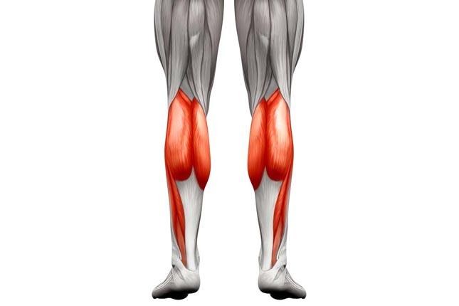 Musculation des mollets hommes