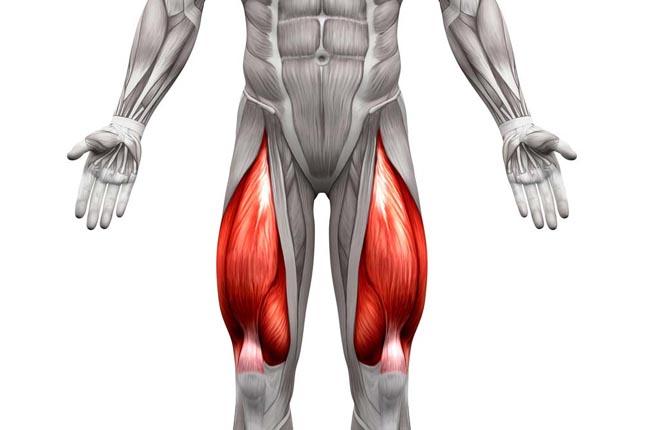 Musculation des cuisses pour les hommes