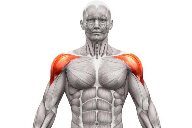 Musculation pour les épaules